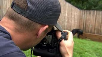 Photographer Captures Beauty of Rescue Animals