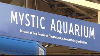 SNAP Families To Get Free Access to Mystic Aquarium