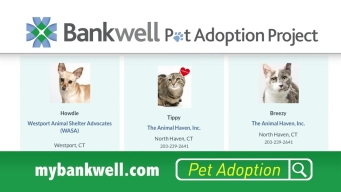 CT Spotlight: Bankwell Takes Part in Clear the Shelters