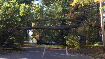 Downed Tree Closes Wahackme Road in New Canaan