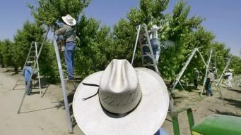 EPA Broke Law, Ignored Science on Harmful Pesticide: Court