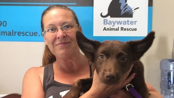 Memorable Moments From #ClearTheShelters