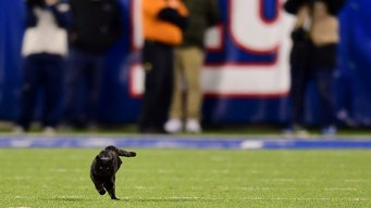 Take Paws: Black Cat Halts Cowboys-Giants Game After Rushing Field