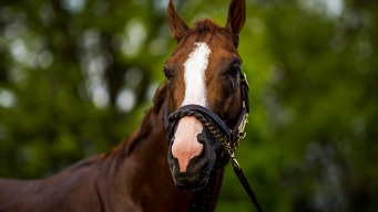 What Would You Name Your Racehorse?