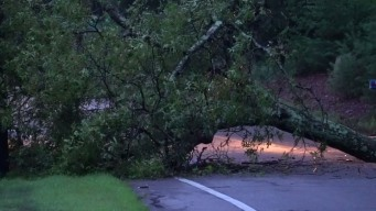 Crews Clear Downed Tree on Route 83 in Glastonbury