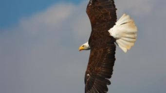 This Weekend: Eagle Cruise