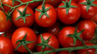 Creamy Heirloom Tomato-Basil Chowder