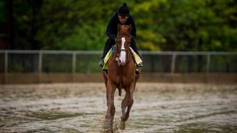 Triple Crown: Belmont Distance, Fatigue to Test Justify