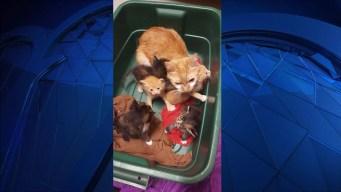 Cat, Kittens Found in Box on Side of Road in Wolcott