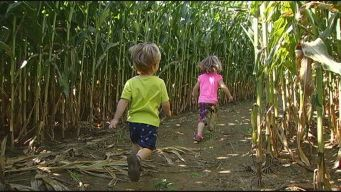 Scantic Valley Farm Corn Maze