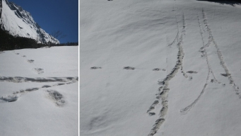 Indian Army Claims It Found Yeti Footprints in the Himalayas