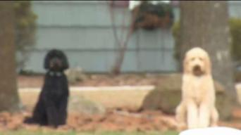 Family Dog Killed by Coyote in Simsbury