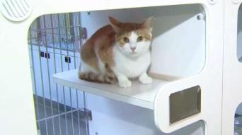 One Cat Remains Available After Clear the Shelters