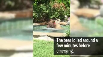 b05ded25c5 California Bear Relaxes in Hot Tub