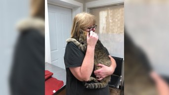 NY Woman Reunited With Missing Cat After 11 Years
