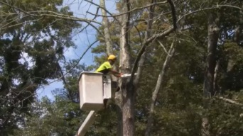 Invasive Species Are Killing Trees in Connecticut