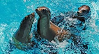 Name That Sea Lion