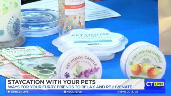 CT LIVE!: Enjoy a Summer Staycation with your Pets