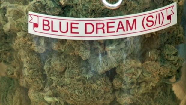 [BAY] San Jose Dispensaries Offering Free Pot for Voters
