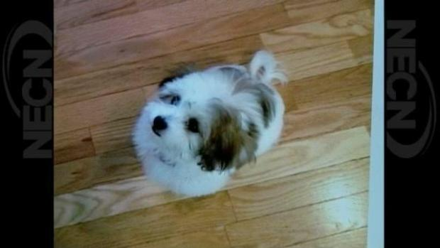 [NECN] Family pleads for return of puppy stolen in home invasion