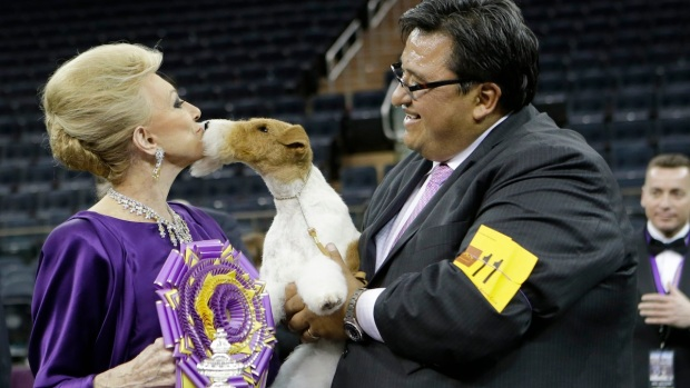 [NATL] Westminster Dog Show 2014: Best Paw Forward