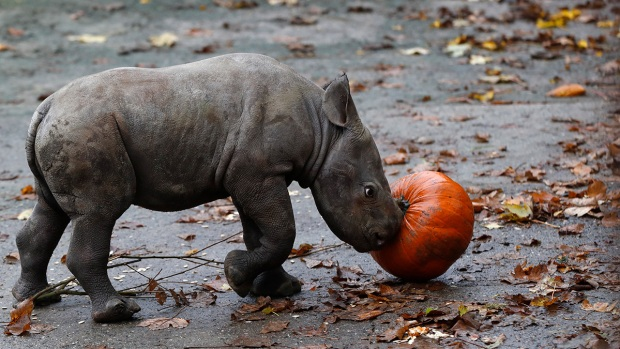 Adorable Zoo Babies: Baby Rhino