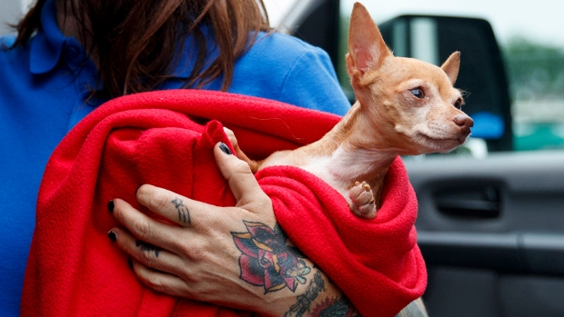 [NATL-DC] Photos: Shelter Animals Arrive in DC Ahead of Florence