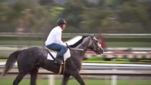 [LA] Another Horse Dies at Santa Anita Race Track
