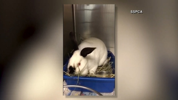 [NATL] Nearly 300 Rabbits Rescued From California Home