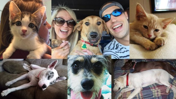 Newly Adopted #ClearTheShelter Pets