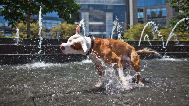 Tips for Keeping Your Pet Safe in the Summer Heat
