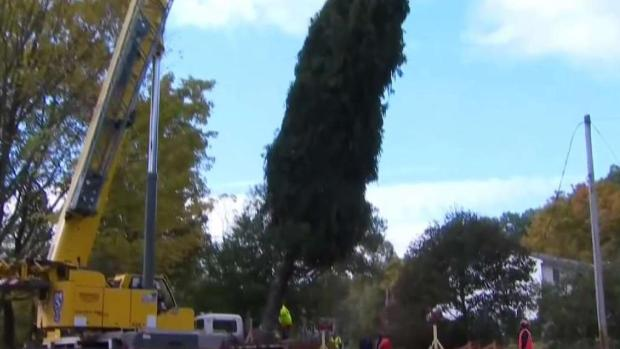 [HAR] Holiday Tree Heads to New Haven
