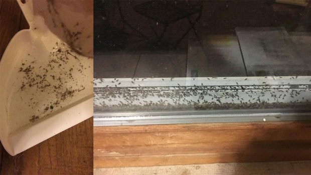 PHOTOS: Lots of Bugs Seen in Connecticut Following Storms