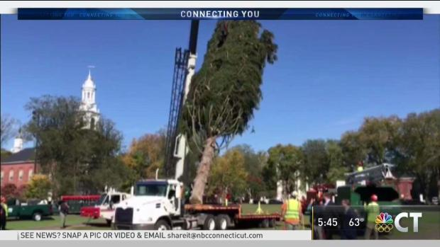 New Haven Holiday Tree Arrives on the Green