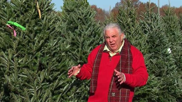 [NATL-NY] How to Pick the Perfect Christmas Tree