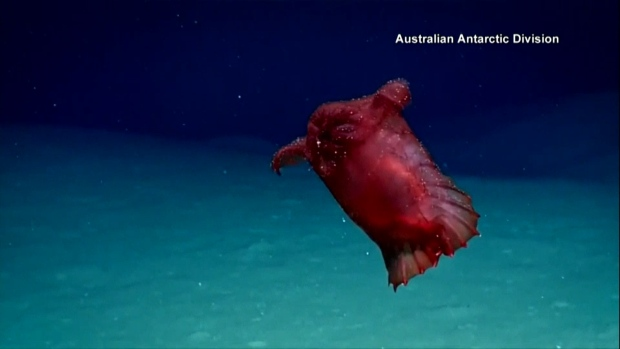 [NATL] 'Headless Chicken Monster' Spotted Off Antarctica