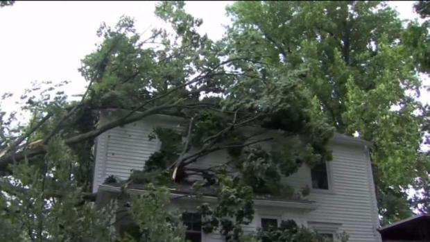 Storms Take Out Trees and Wires in Manchester