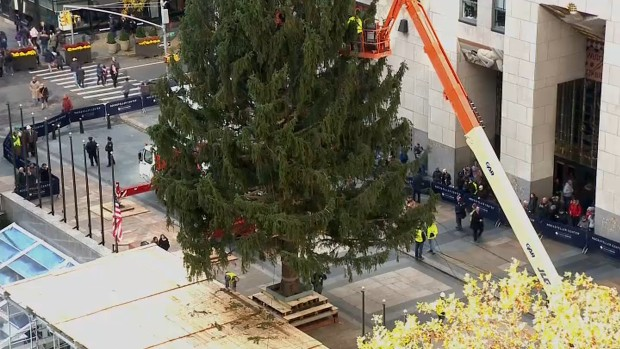 See How a 72-Foot Tree Gets Hoisted Up on Rockefeller Plaza