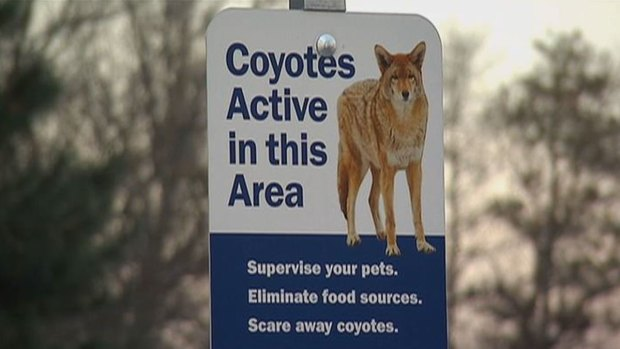 [CHI] Wheaton Police: Three Dogs Attacked by Coyotes in Two Weeks