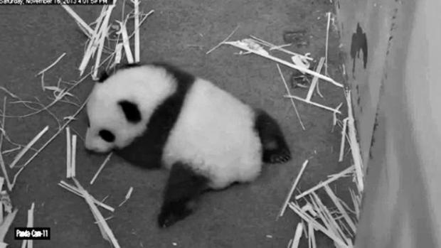 [NATL-DC] Our 10 Favorite, Fabulously Adorable Bao Bao Moments