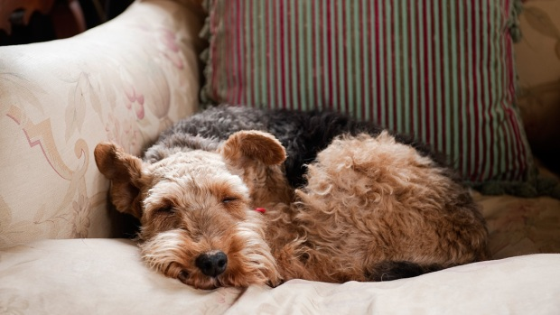 11 of the Best Dog Breeds for Senior Citizens