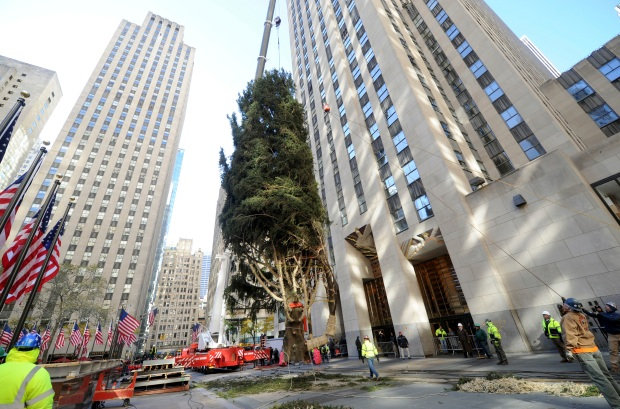 [NATL-NY]The Rockefeller Tree Arrives! 75-Foot Norway Spruce Graces the Plaza