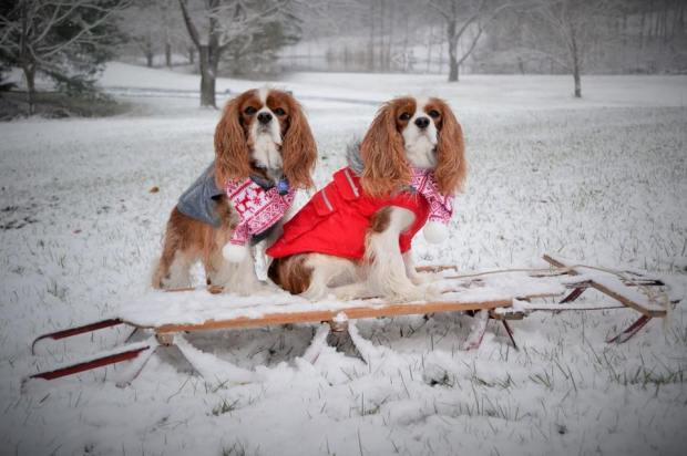 Local Pups Make a Fashion Statement During DC's Arctic Freeze