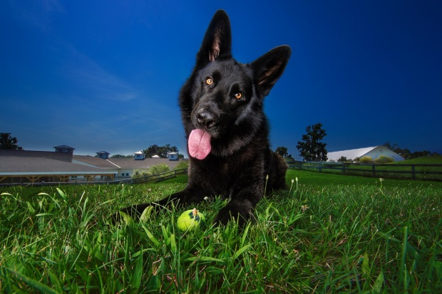 Famed Photographer Uses Photos to Help Shelter Dogs Find Homes