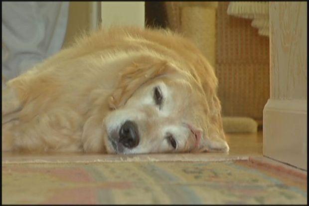 [HAR] Owner Struggles After Dog Is Struck