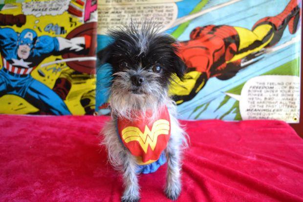 [NATL-LA] PAWmicon: Canine Pop Culture Fest