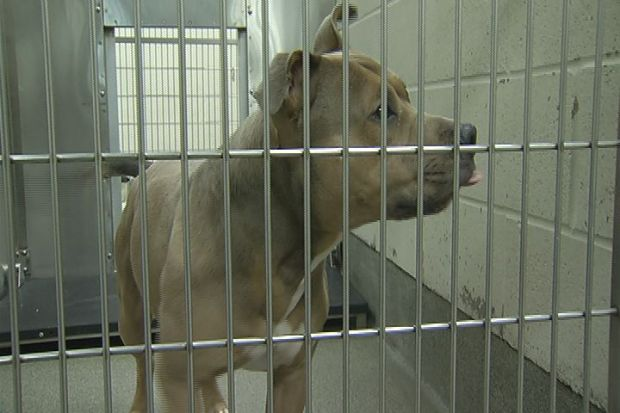 [HAR] New Bill Proposed To Help Protect Pets