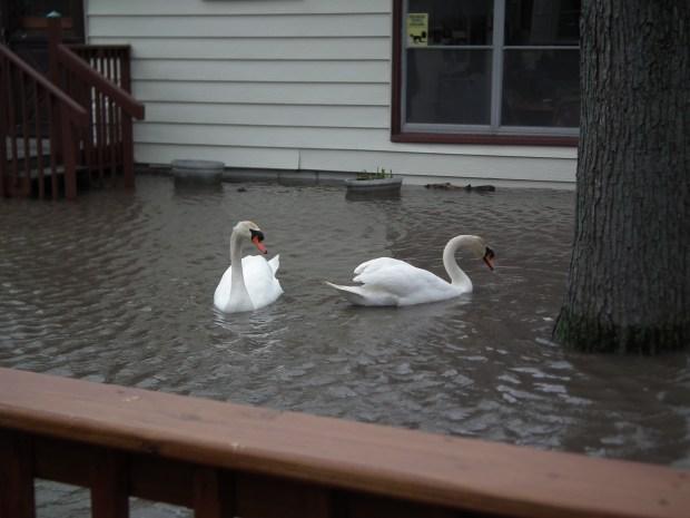 Heavy Rain Causes Flooding