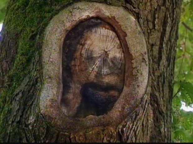 [HAR] Jesus Tree