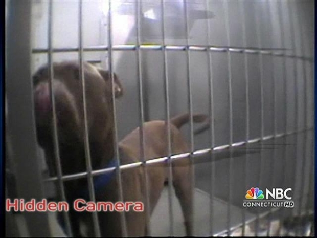 [HAR] Calling for Change at CT Humane Society